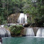 Bamboo avenue et YS Falls